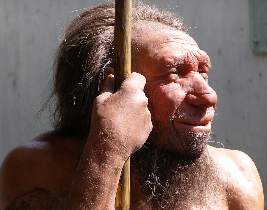 Neanderthal brain was larger than the modern human brain.