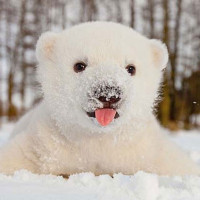 Animals that see snow for the first time. These photos will give you a magical winter mood!