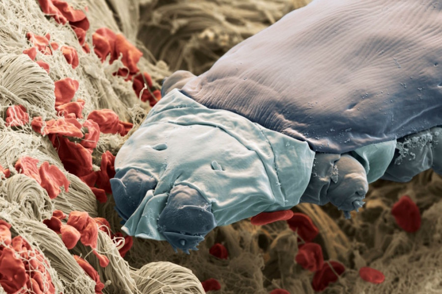 Most of us have Demodex mites that live on our eyelashes. These microscopic mites have claws and mouths.
