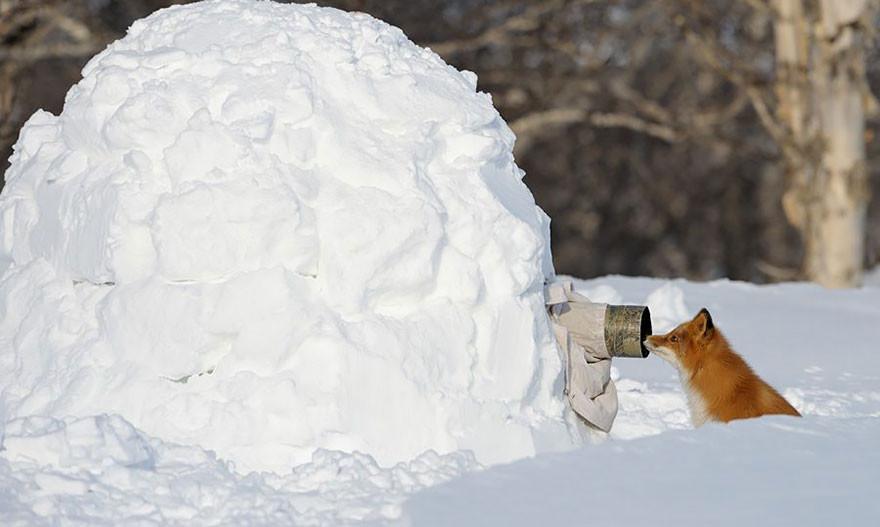 Source: animalworld.com.ua