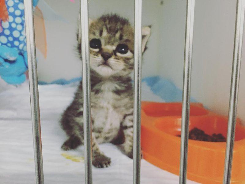 kittenxlady05[1]